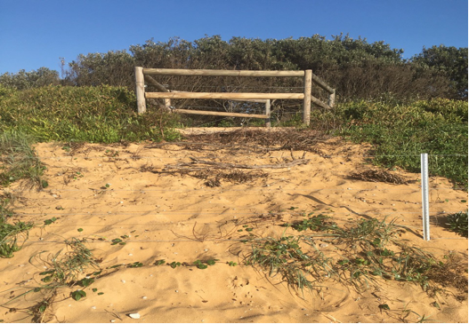 Dune destruction below the Surfer Lookout – Wamberal Beach.